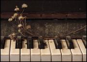 Частные уроки игры на фортепиано. Минск
